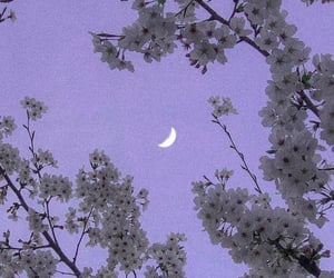 background, flowers, and moon image