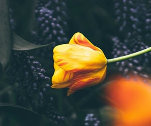 phtography and beautiful flowers image