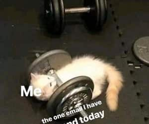 animal, kitten, and lifting weights image