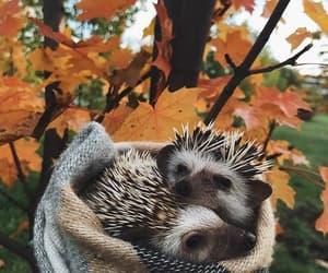 animal, hedgehog, and autumn image