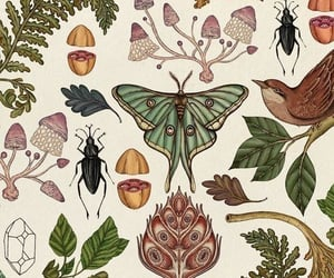 nature, wallpaper, and butterfly image