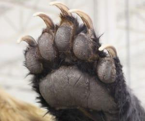 цитата, медведь, and слова image