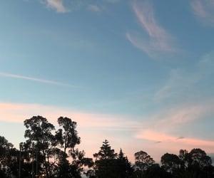 blue, ecuador, and forest image