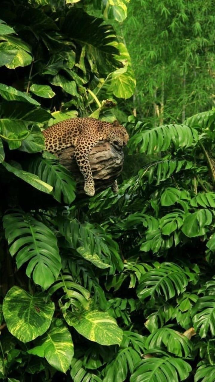 animal, jungle, and nature image