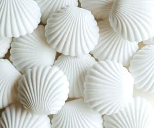 aesthetic, seashells, and shell image