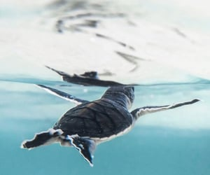 animal, turtle, and water image