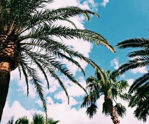 palms, summer feeling, and summer time image