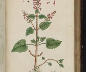 herbs, pictorial works, and #womeninscience image
