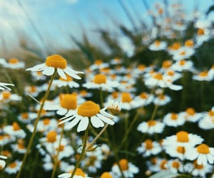 flower, flowerpower, and nature image