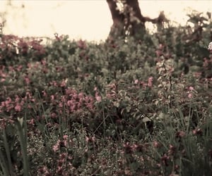 background, folklore, and flowers image