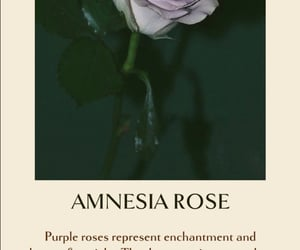 floral, rose, and amnesia image