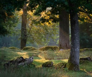 forest, photography, and light image
