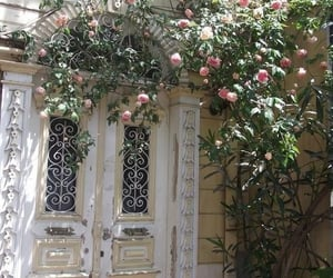 flowers, rose, and door image