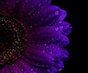 black background, wallpaper, and flower image