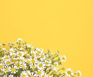 aesthetic, background, and daisies image