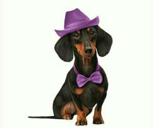 adorable, animal, and dashound image