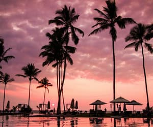 exotic, pink sky, and tropical image