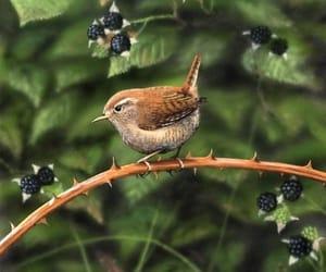 фото, птица, and ягоды image