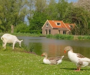nature, animal, and cottagecore image