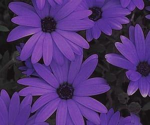 violeta and fotografía image