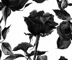 wallpaper, phone wallpaper, and roses background image