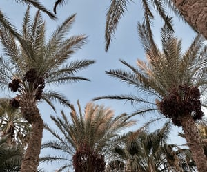palm trees, summer, and egypt image