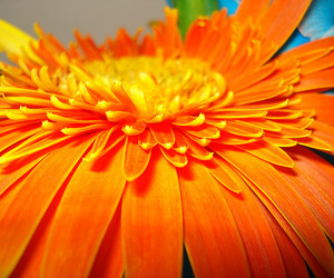 close, flower, and petals image