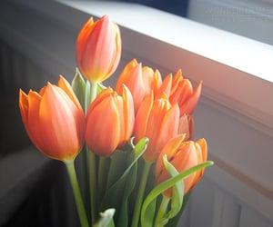 flowers, tulips, and orange image