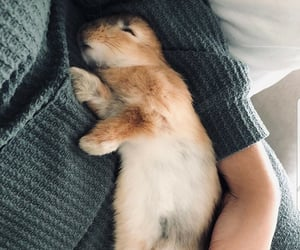 animals, bunny, and rabbits image