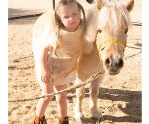 equestrian, cute, and equine image