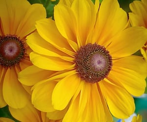 flores, flowers, and yellow image