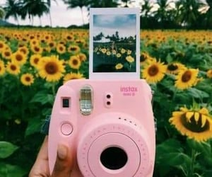 sunflower, camera, and polaroid image