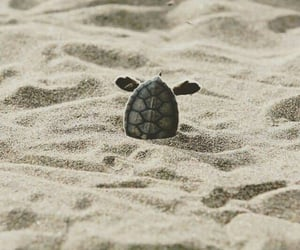 beach, sand, and Tortuga image