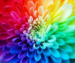 bright colors, palette, and flower image