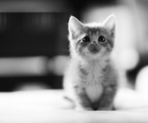 adorable, cat, and black and white image