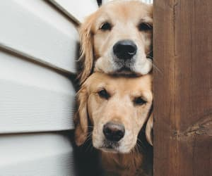 animals, dog, and pet image