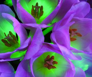 bouquet, purple, and flashlights image