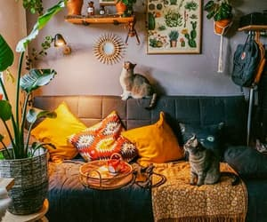 cats, decor, and home image