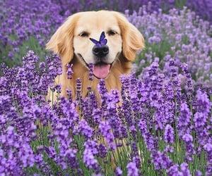 animal, nature, and dog image