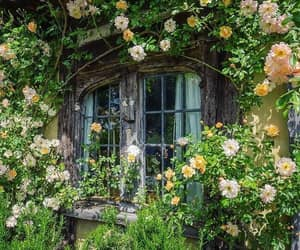 flowers, aesthetic, and nature image