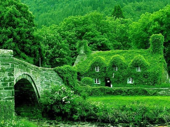 cottage, article, and dream house image