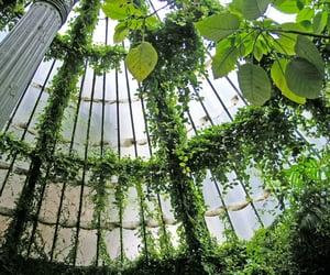 architecture, design, and plant image