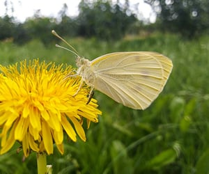 antennae, butterfly, and nature image