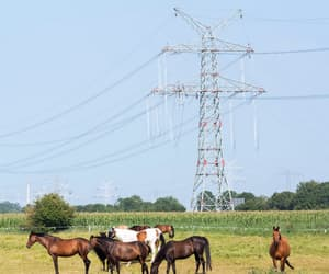 deutschland, germany, and horse image