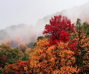 autumn, golden, and nature image