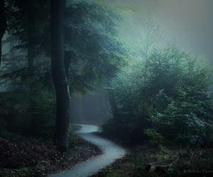 ночь, лес, and дорога image