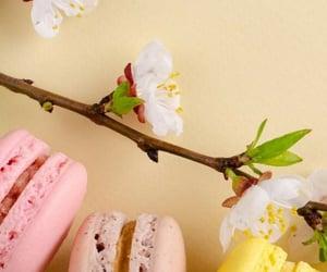 beautiful, wallpaper, and macaron image
