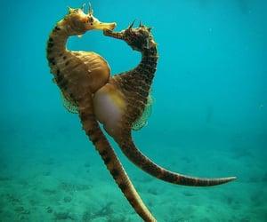 animals, seahorse, and belleza image