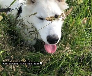 animals, wink, and instagram image