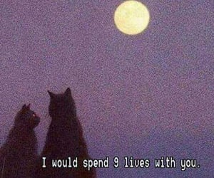 cat, love, and moon image